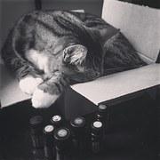 cat-1301160__180